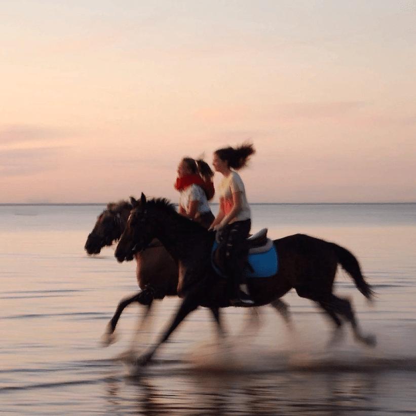 Катание на лошадях и пони со скидкой до 51%