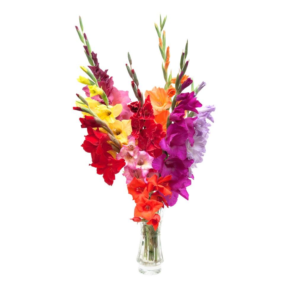 Букет цветов из гладиолусов фото, цветов оптом игуана