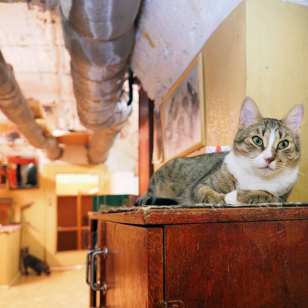 эрмитажный кот фото том, что если
