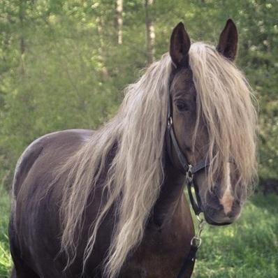 Конные прогулки и посещение мини-зоопарка в «Сойкино» со скидкой 40%