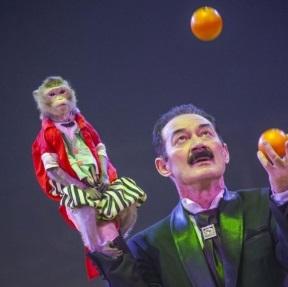 Цирковое представление «Волшебство под куполом и на манеже» в «Цирке в Автово»
