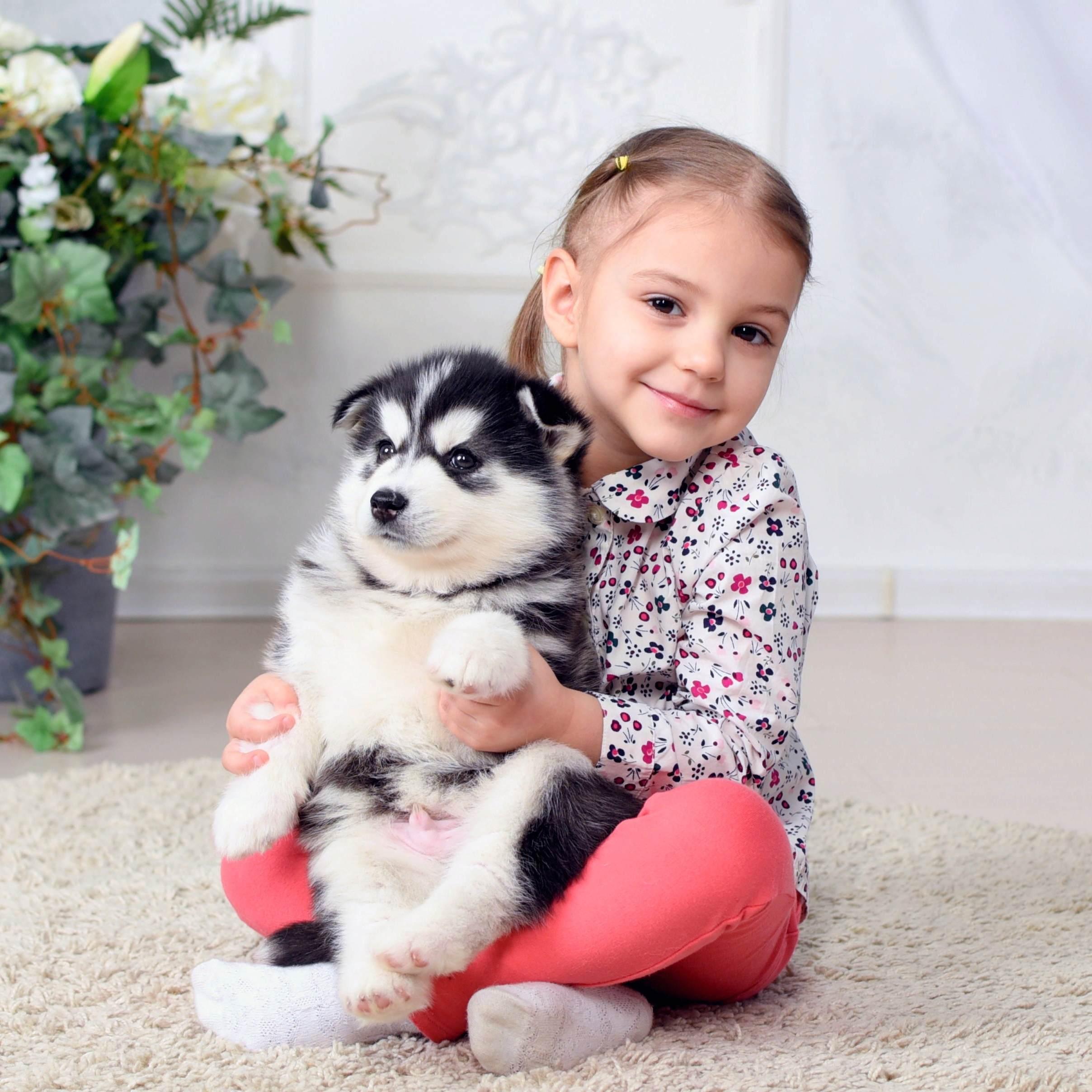 Фотопроект «Сказка со щенками хаски» со скидкой 65%