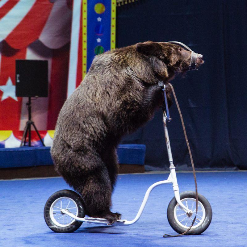 «Арена чудес» в цирке Автово