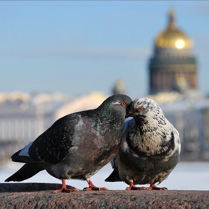 Экскурсия «Романтический Петербург»